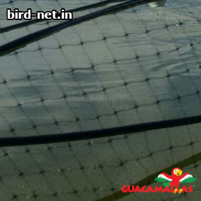 bird net installed for protection to fishes